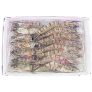 越南海虎蝦